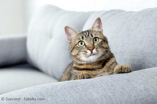was tun bei unsauberkeit von katzen die besten tipps. Black Bedroom Furniture Sets. Home Design Ideas