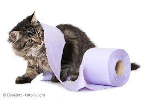 Katzenstreu entsorgen - einfach und umweltfreundlich