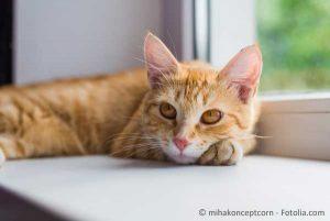 COSYCAT Katzenstreupellets klumpen gut und sind leicht zu entsorgen