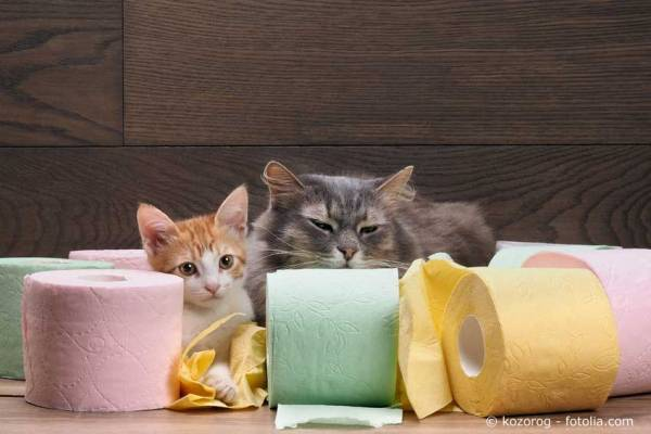 Self-cleaning litter box - function, pros and cons