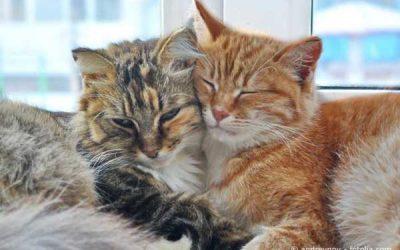 Katzenverhalten verstehen