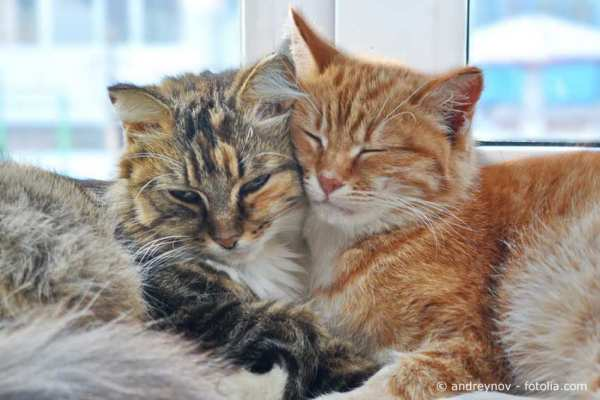 Understanding cat behaviour - for the benefit of your feline friend