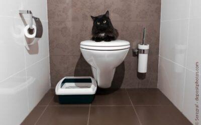 Welches Katzenklo eignet sich als stilles Örtchen?