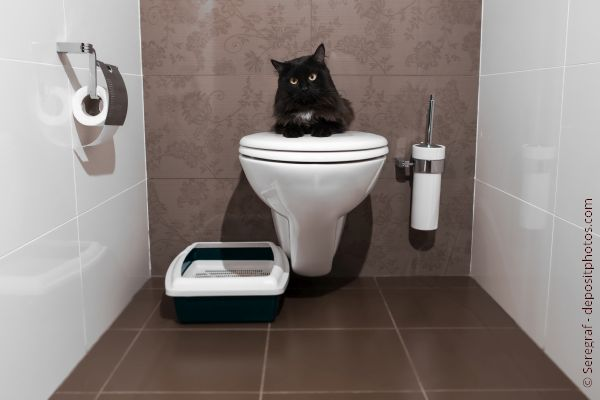 Cat sitting on a toilet with a litter box next to it
